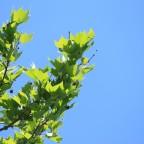 frisches Grün vor blauem Himmel