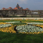 Blütenpracht in Dresden