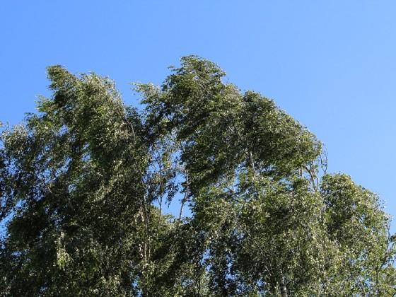 Wind...bewegte Luft