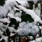 Schneeflöckchen