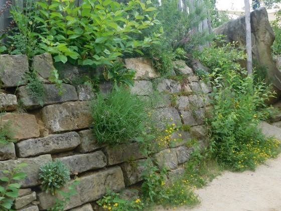 Bewachsene Steinmauer
