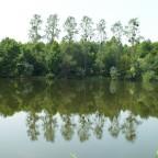 Baumreihe im Spiegel