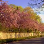 Frühlingsallee