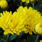 Geschenkte Blumen