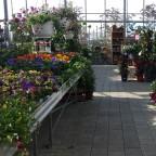 Farbexplosion im Gartencenter