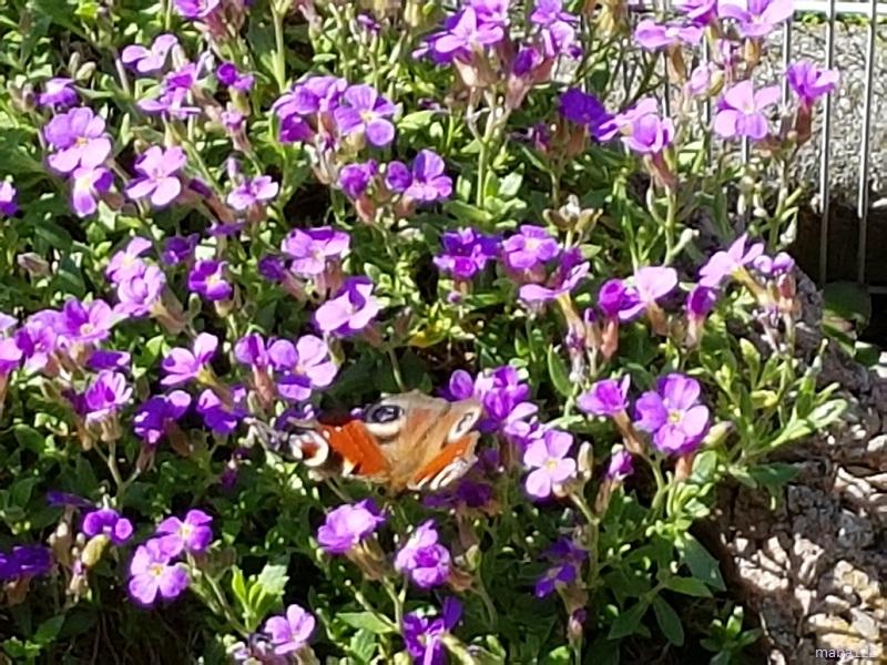 mit Schmetterling