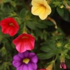 Sommer ist wenn die Blumen blühen