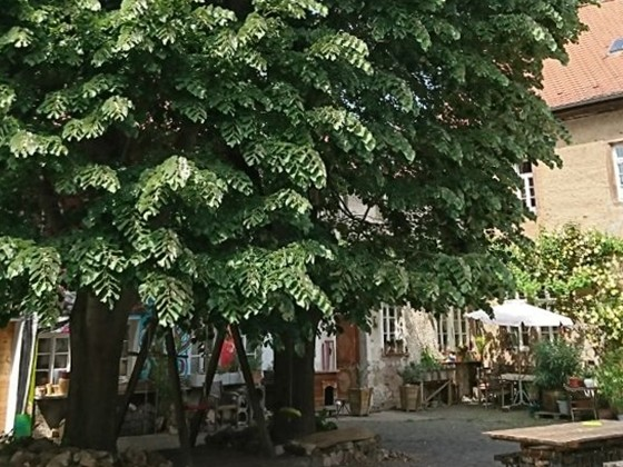 Hofbäume