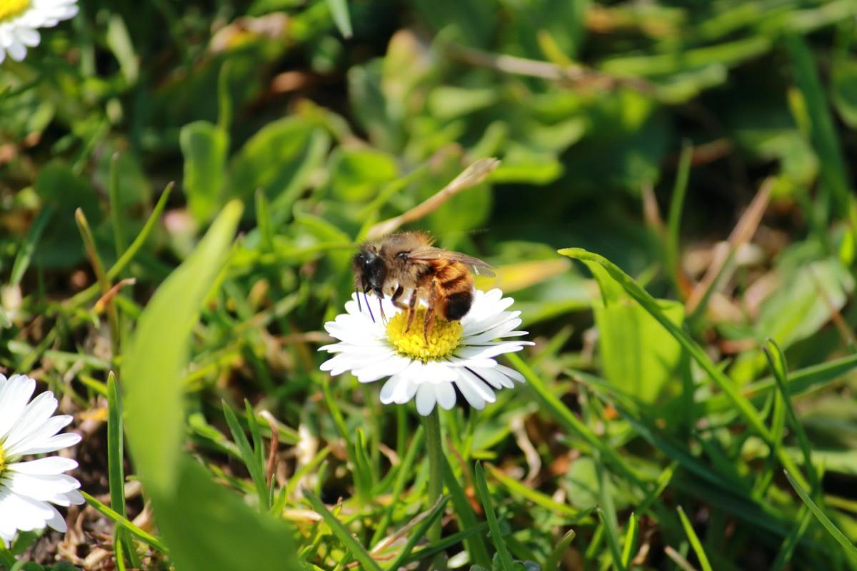 Biene liebt Blume