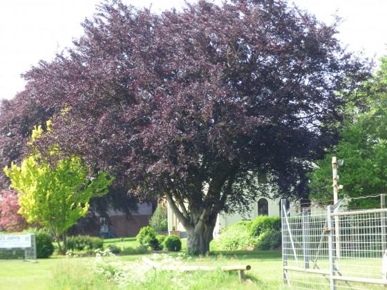 Alter Baum