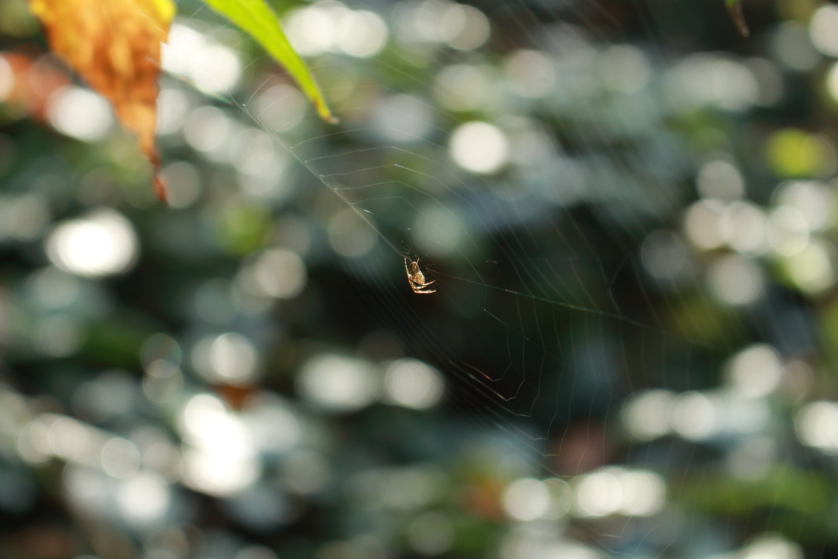 Herbszeit ist auch Spinnenzeit