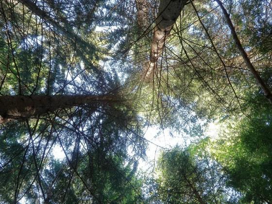 Der Wald aus der Sichtweise eines Käfers