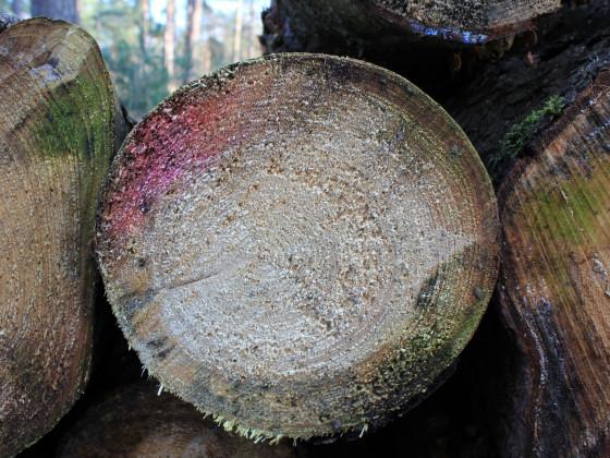 Es duftet nach frischem Holz....