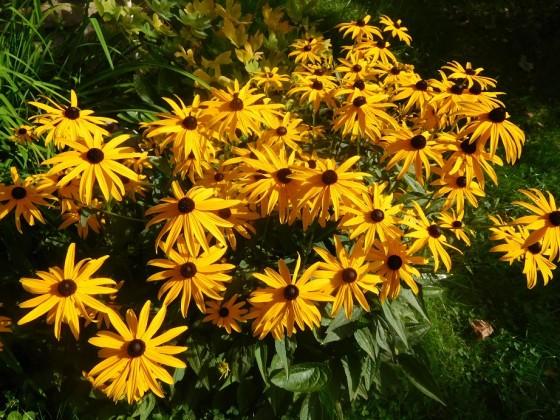 ...ein Meer von farbenfreudigen Sommerblumen