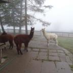 und nochmals Nebel