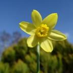 1. Frühlingsgesichter