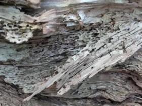 Holz - Wurm-arbeitsstätte