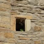 .. in fremden Mauern bummeln
